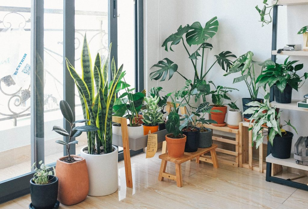 Indoor Plants can be grown in a condominium | Affordable Condo Philippines