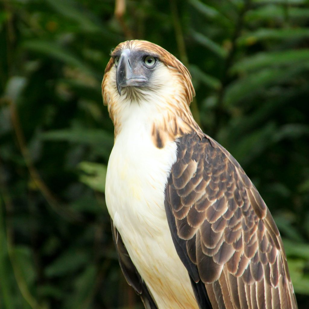 The-Philippine-Eagle-Affordable-Condo-in-Davao-Northpoint-and-Camella-Manors-Frontera