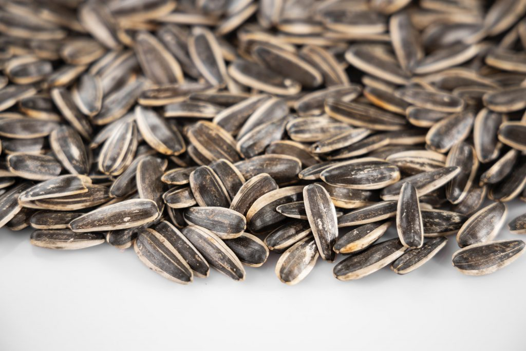 Chia Seeds | Healthy Food for Immunity | Camella Manors