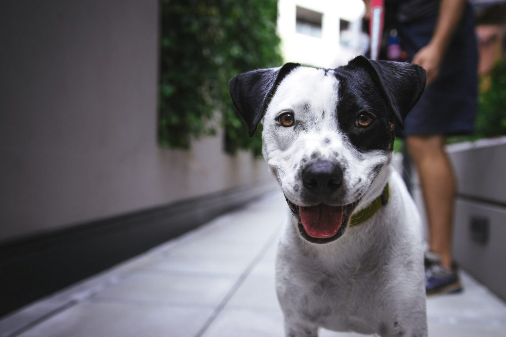 Dogs - Keeping Pets in Condo - Camella Manors