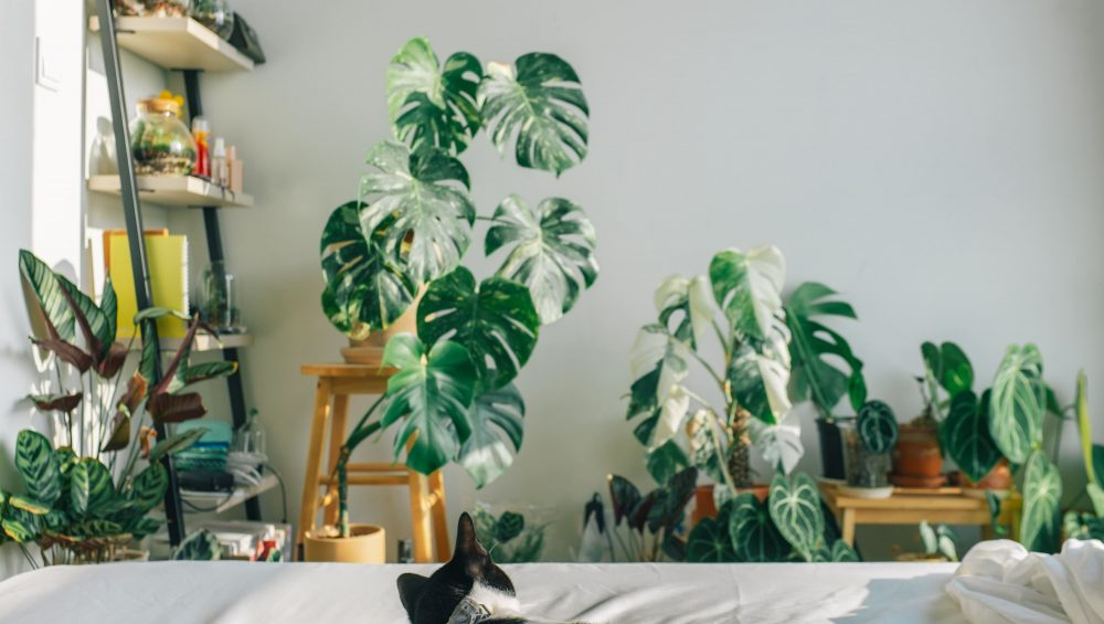 Best Indoor Plants to Purify Air Inside Living Area | Affordable Condo Philippines | Camella Manors