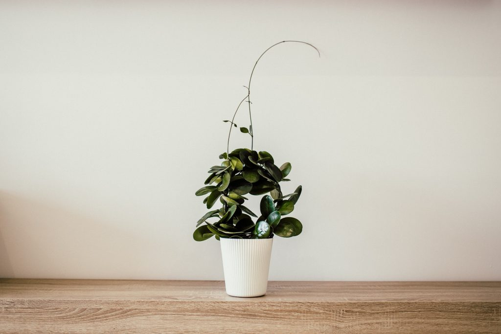 House Plant Spot You forget to Clean Inside Your Unit | Camella Manors