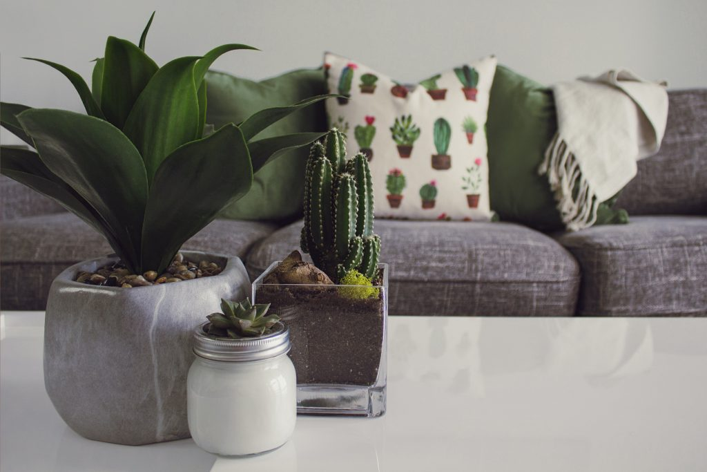 Most Popular Indoor Plants for your Condo | Affordable Condo Philippines | Camella Manors